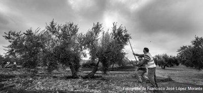 El Grupo Focal de Acceso a la Tierra propone soluciones innovadoras a las dificultades de acceso al suelo agrario